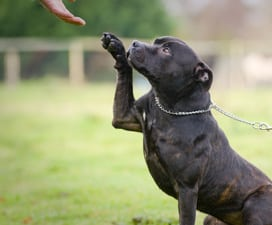 How-To Videos in Hamdem: Dog raising its paw